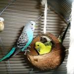 Vogelkäfig Zubehör kaufen